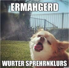 Ermahgerd Animal Memes - ermahgerd forever giggles pinterest humor animal and stuffing