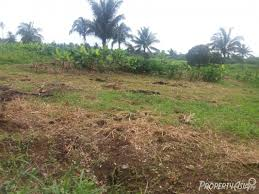 500 Sqm 300 Sqm Agriculture For Sale In Brgy Dagatan Amadeo Philippines