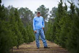 once plentiful few christmas tree farms remain in state news