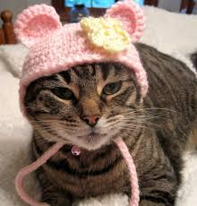bear hat cats costume cats pet clothing pet hat