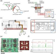 neuromorphic neural interfaces from neurophysiological
