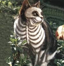 Halloween Costume Cat 30 Awesome Dog Cat Halloween Costumes Dogtime