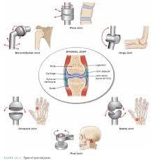 Anatomy And Physiology Midterm Exam Human Anatomy Movements Google Search Anatomy Tuesday