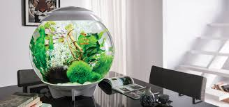 biorb home aquariums terrariums loversiq