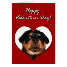 valentines day rottweiler puppies cards greeting photo cards