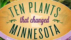 native plants minnesota these 10 plants changed minnesota forever u2013 twin cities
