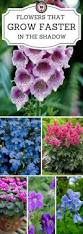the 25 best shade loving flowers ideas on pinterest shade