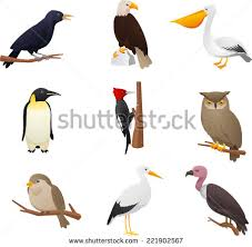 realistic bird collection owl pelican woodpecker stock vector