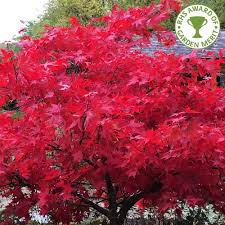most popular garden trees buy ornamental trees ltd