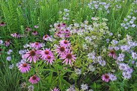 native plants illinois butterfly gardening illinois