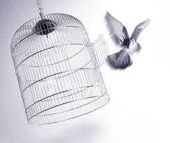 uccelli in gabbia il labirinto dei ricordi
