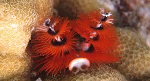 black marlin diving indonesia una una and kadidiri black marlin