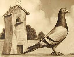 cuisine des pigeons voyageurs coutumes et traditions service de correspondance à bord des