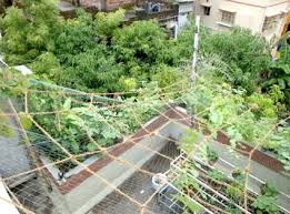 the ultimate guide to indian rooftop gardening sacred cows