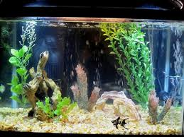 Live Plants In Community Aquariums by Aquarium Decorations Ratemyfishtank Com