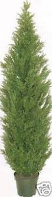 two 5 foot outdoor artificial cedar topiary trees potted uv