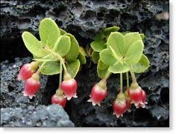 hawaii plants plants on the big island of hawaii