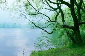 moody landscape with tree and lake in the morning as nature