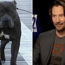 john wick chapter 2 keanu reeves finally reveals the dog u0027s name