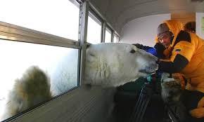 Coke Bear Meme - polar bear wonders if this taco stand has any coke