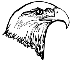 bald eagle head colouring page fun colouring