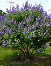Texas Landscape Plants by 69 Best Trees We Love For North Texas Images On Pinterest
