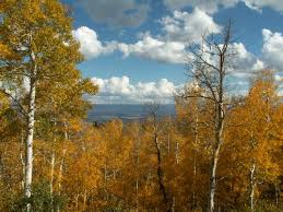 Utah forest images National forests in utah jpg