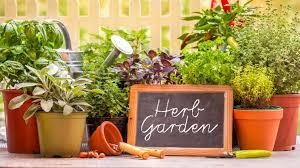 Herb Garden Layout by A Year In The Garden Vegetable U0026 Herbs U2013 Cae