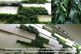 world class green wall vertical garden by technic garden and