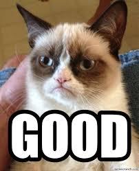 Good Meme Grumpy Cat - cat good