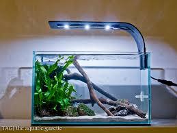 nano aquascape tag s shrimp tank t a g