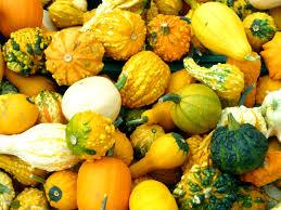 free images nature fruit flower orange food green harvest