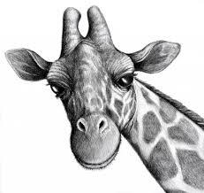 pencil drawing animals pencil drawing of animals pencil sketch