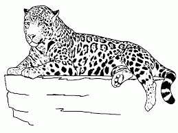 coloring pages of a animals coloring home