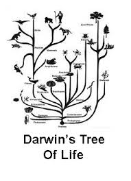the lyell darwin connection