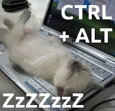 Sleeping Cat Meme - funny sleeping cat meme credit to swipurr com cats