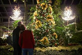 when do the zoo lights start calgary zoolights watch holiday lights this winter