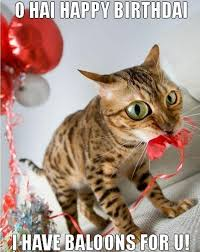 Funny Cat Birthday Meme - birthday card sayings with cats free funny happy birthday cards