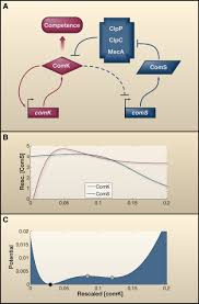 cellular decision making and biological noise from microbes to