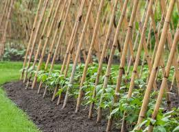 Vertical Garden Trellis - grow up how to design vertical gardens for tiny spaces