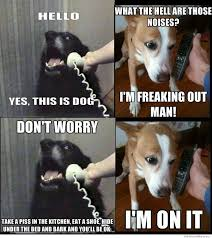 Yes This Is Dog Meme - deluxe 30 yes this is dog meme wallpaper site wallpaper site