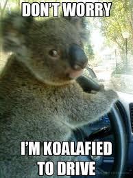 Aussie Memes - best 25 australia meme ideas on pinterest aussie memes