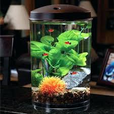 fish tank decoration ideas fish bowl decorations beautiful great for