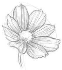 photos easy art sketches of flowers drawing art gallery
