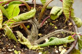 Common Plant Diseases - common garden pests and problems in spring wilkolife