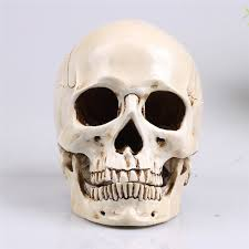 skull decor skull decor mongolian replica model realistic lifesize 1 1
