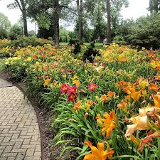the daylily gardens feature over 800 varieties of this lovely