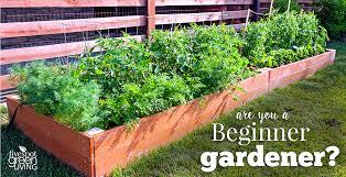 best vegetables for beginner gardeners five spot green living