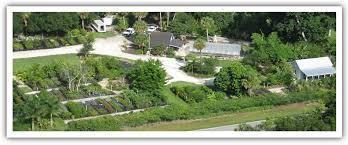 home elata natives florida native plants nursery and landscape