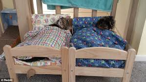 Cat Bunk Bed Cats Sleep In Ikea Miniature Beds Made For Dolls Daily Mail